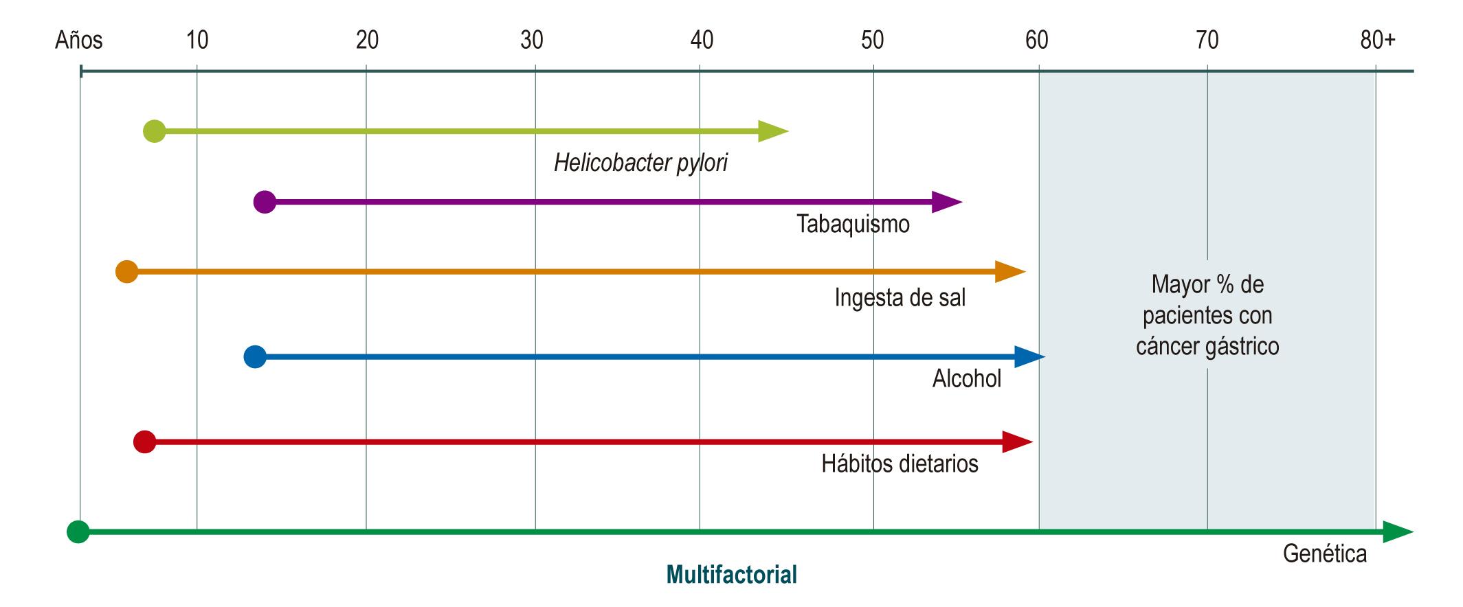 Figura 1. Cáncer gástrico. Factores de riesgo en el tiempo (historia natural). Elaboración propia.